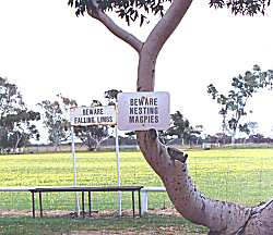 Curious signs at Eneabba oval