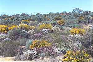 Kwongan heath