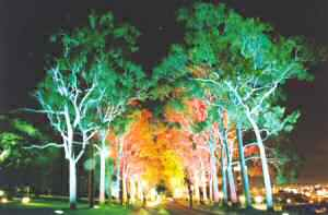 Floodlit road in Kings Park at night